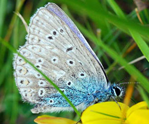 Fun Facts on Butterflies for kids ***