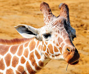 fun facts for kids fun facts on animals