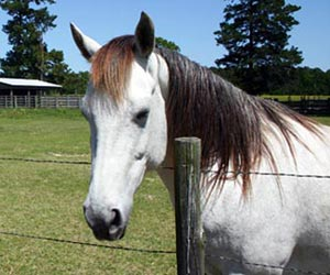 Fun Facts on Horses for kids ***